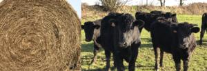 PDT-2019-Joel Philippe-eleveur-Black Angus-Couverture-Les Papotis de Thalie